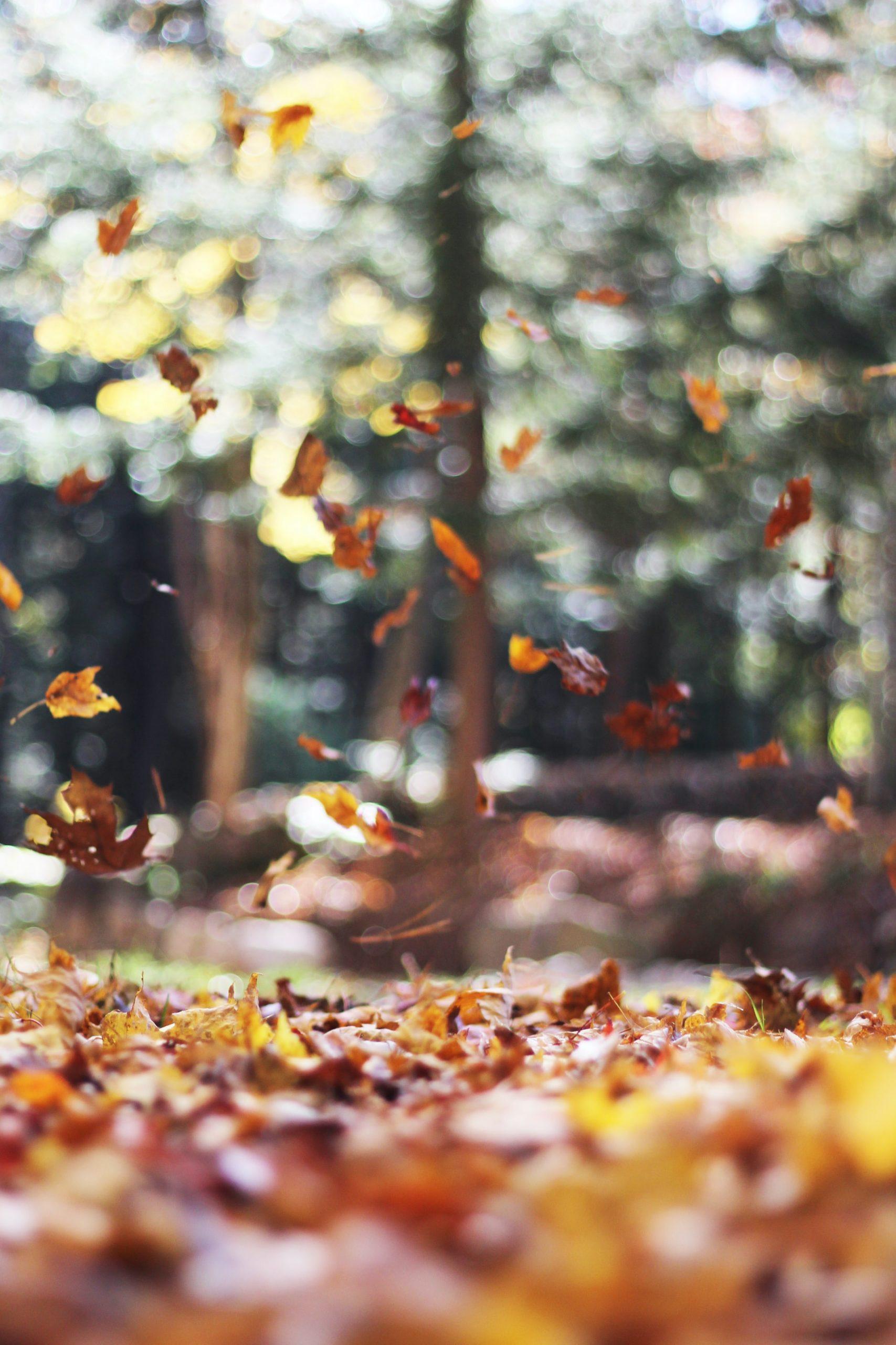Sådan gør du hjemmet klar til efteråret